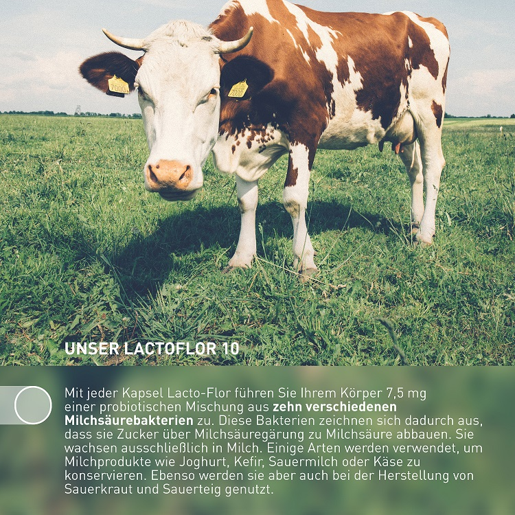 Lacto-Flor 10, zur Unterstützung der probiotischen Darmregulierung, 60 Kapseln
